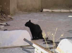 This Cat...man...she literally saw me with the Cam and I stared at her saying HELLO. Then she POSED in the ANCIENT POSE FOR MY CAMERA! © Nov 2010 Alexandria/Egypt