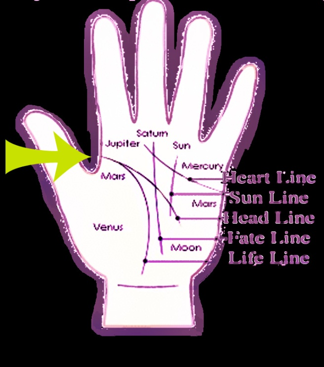 Rare Hand Palm Lines Information: The Average Hand Palm Lines (Example Image) © How to Read Hands