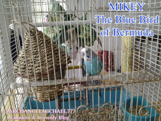 Mikey- The Blue Bird of Bermuda - ArchangelMichael777 Blog - © Michael Jackson TwinFlame Soul Official Information