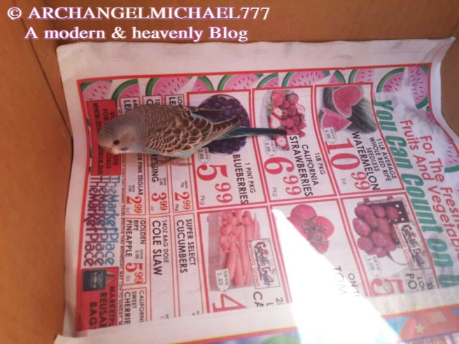 Mikey the Blue Bird - Right after being rescued in Box - Michael Jackson TwinFlame Soul Official Story © ArchangelMichael777