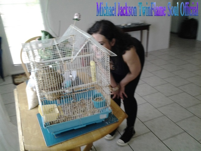 "How Michael Jackson in Spirit (Archangel Michael) helped me to rescue a little Blue Bird named ""Mikey"" © Michael Jackson TwinFlame Soul Official"