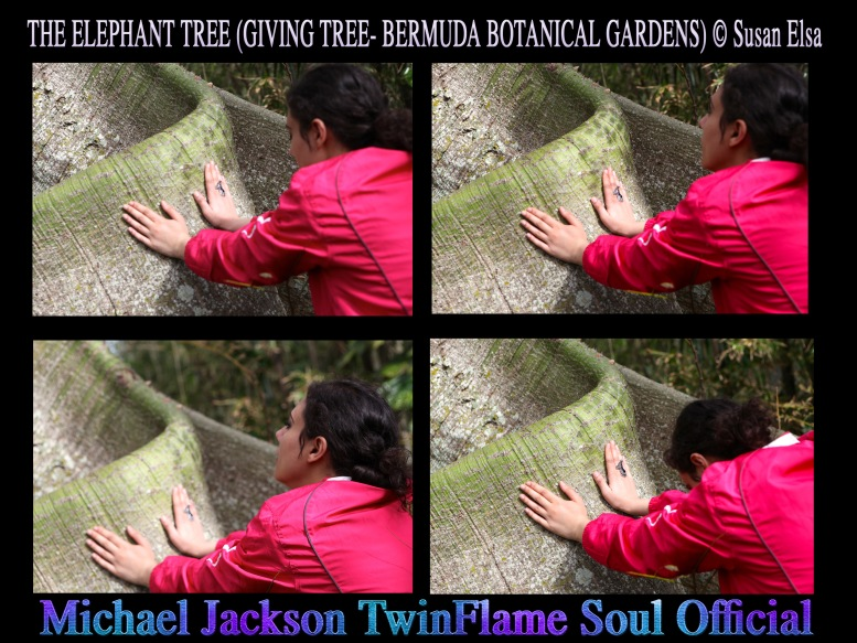 The Elephant Tree Story (Giving Tree Bermuda Botanical Gardens) © Susan Elsa - Michael Jackson TwinFlame Soul Official Blog