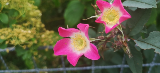 The June Garden - Special Spiritual Articles Series - INTRODUCTION © Susan Elsa - Michael Jackson TwinFlame Soul Official - ARCHANGELMICHAEL777-