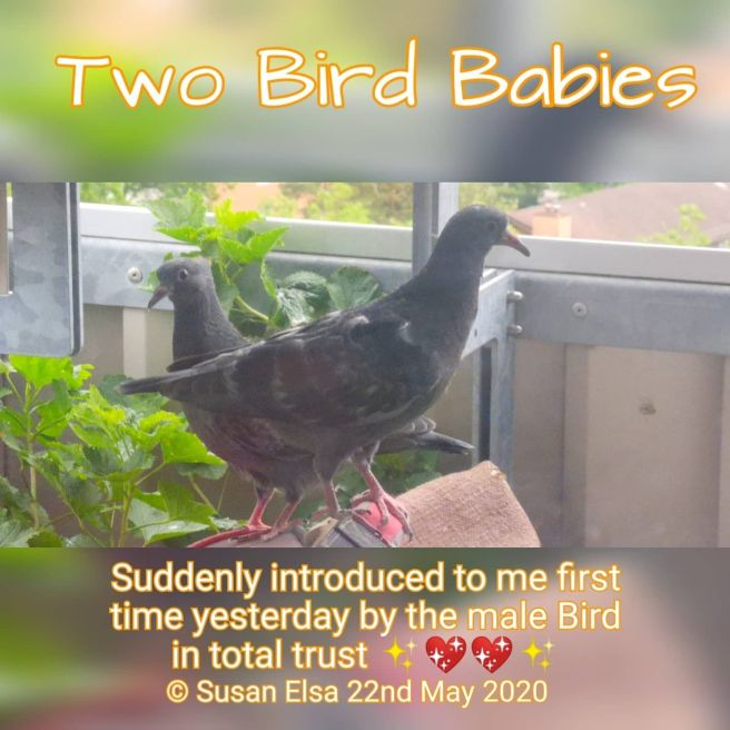 Two Bird Babies introduced to Susan Elsa © Michael Jackson TwinFlame Soul Official